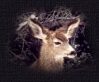 Deer pictures are the photography of Moon and Back graphics.