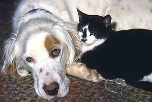 Best Friends...image of cat and dog.
