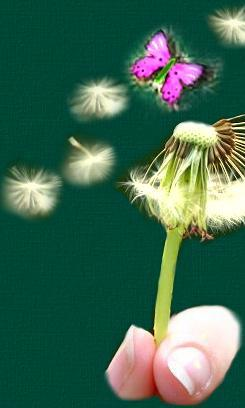 Picture of dandelion seeds blowing away while a wish is made for you