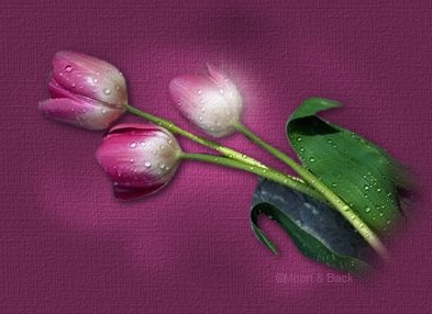 Beautiful Pink Tulips graphic.